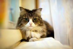 γάταη Στοκ Εικόνα