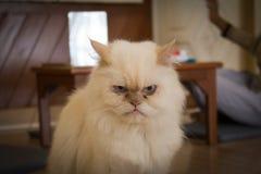 γάταη στοκ εικόνες
