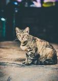 Γάταη  Στοκ Φωτογραφίες