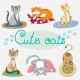 Γάτα Ð ¡ Ute στις κουβέρτες Στοκ Εικόνες