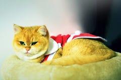 Γάτα Άγιου Βασίλη Στοκ εικόνα με δικαίωμα ελεύθερης χρήσης