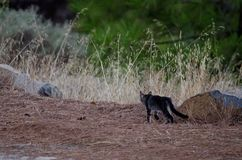 γάτα άγρια Στοκ εικόνα με δικαίωμα ελεύθερης χρήσης