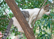 γάτα άγρια Στοκ Φωτογραφία