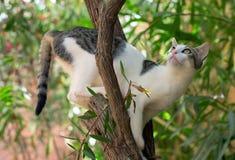 γάτα άγρια Στοκ φωτογραφίες με δικαίωμα ελεύθερης χρήσης