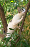 γάτα άγρια Στοκ Φωτογραφίες