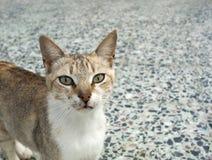 γάτα άγρια Στοκ Εικόνες