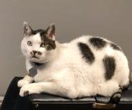 γάτα έκπληκτη στοκ φωτογραφίες