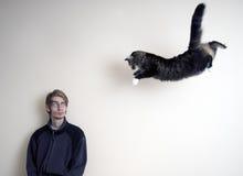 γάτα έξοχη στοκ εικόνα