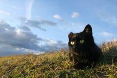 γάτα έχουσα νώτα Στοκ φωτογραφία με δικαίωμα ελεύθερης χρήσης