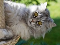 γάτα λίγα γλυκά Στοκ φωτογραφία με δικαίωμα ελεύθερης χρήσης