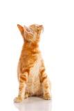 γάτα λίγα κόκκινα Στοκ εικόνα με δικαίωμα ελεύθερης χρήσης