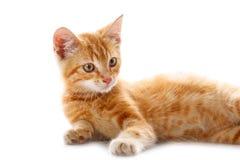 γάτα λίγα κόκκινα Στοκ εικόνες με δικαίωμα ελεύθερης χρήσης