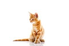 γάτα λίγα κόκκινα Στοκ Εικόνες