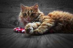 γάτα λίγα κόκκινα Στοκ φωτογραφία με δικαίωμα ελεύθερης χρήσης