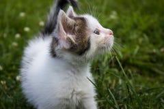 γάτα λίγα Στοκ Φωτογραφίες