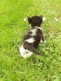 γάτα λίγα Στοκ φωτογραφία με δικαίωμα ελεύθερης χρήσης