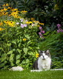 Γάτα δίπλα στα λουλούδια Στοκ φωτογραφίες με δικαίωμα ελεύθερης χρήσης