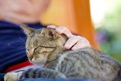 Γάτα αγκαλιάς ατόμων Στοκ Εικόνες