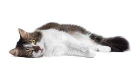 γάτα ανασκόπησης που απομ στοκ φωτογραφία