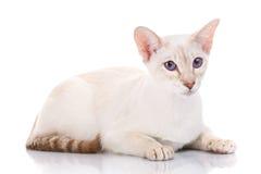 γάτα ανασκόπησης που θέτε& Στοκ φωτογραφίες με δικαίωμα ελεύθερης χρήσης