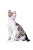 γάτα ανασκόπησης χαριτωμένη ξέρω όπως τη στιγμή σκεπτόμενος σε αυτό που άσπρος στοκ φωτογραφία με δικαίωμα ελεύθερης χρήσης