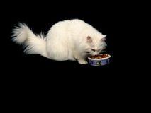 γάτα ανκορά που τρώει τα τρό& Στοκ φωτογραφίες με δικαίωμα ελεύθερης χρήσης