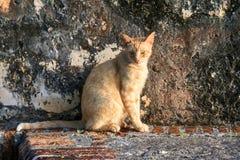 Γάτα απογεύματος Στοκ Εικόνες