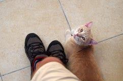 Γάτα από τα πόδια στοκ φωτογραφίες με δικαίωμα ελεύθερης χρήσης
