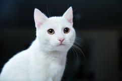 γάτα αρκετά Στοκ εικόνα με δικαίωμα ελεύθερης χρήσης