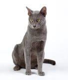 γάτα αρκετά roan Στοκ φωτογραφία με δικαίωμα ελεύθερης χρήσης