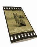 γάτα αρνητική Στοκ Φωτογραφίες