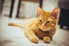 γάτα αστεία Στοκ εικόνα με δικαίωμα ελεύθερης χρήσης