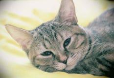Γάτα αφηρημάδας Στοκ φωτογραφία με δικαίωμα ελεύθερης χρήσης