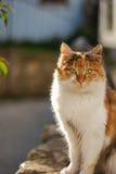 Γάτα βαμβακερού υφάσματος Στοκ φωτογραφία με δικαίωμα ελεύθερης χρήσης
