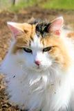 γάτα βαμβακερού υφάσματο Στοκ εικόνα με δικαίωμα ελεύθερης χρήσης