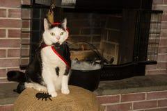 Γάτα βαμπίρ Στοκ φωτογραφία με δικαίωμα ελεύθερης χρήσης