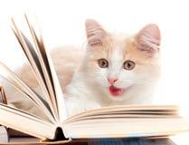 γάτα βιβλίων λίγα που διαβάζονται Στοκ εικόνες με δικαίωμα ελεύθερης χρήσης