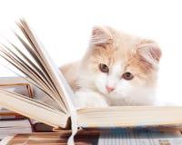 γάτα βιβλίων λίγα που δια&be Στοκ εικόνα με δικαίωμα ελεύθερης χρήσης