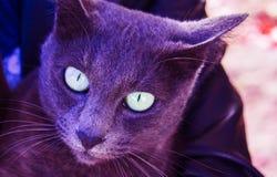 Γάτα, βιολέτα, gerl στοκ φωτογραφία με δικαίωμα ελεύθερης χρήσης
