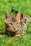 Γάτα, γατάκι στοκ φωτογραφία με δικαίωμα ελεύθερης χρήσης