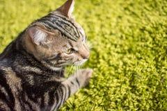 Γάτα γατακιών γατακιών χαριτωμένη Στοκ φωτογραφίες με δικαίωμα ελεύθερης χρήσης