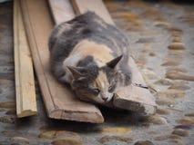 Γάτα γατακιών ύπνου στις οδούς του Μαρόκου Στοκ εικόνες με δικαίωμα ελεύθερης χρήσης