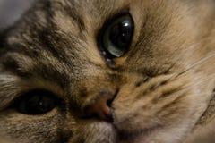 γάτα γατών γατών Στοκ φωτογραφία με δικαίωμα ελεύθερης χρήσης