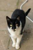 Γάτα γειτόνων Στοκ εικόνες με δικαίωμα ελεύθερης χρήσης