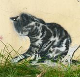 Γάτα γκράφιτι στη χλόη Στοκ φωτογραφία με δικαίωμα ελεύθερης χρήσης