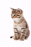 γάτα γκρίζα λίγα Στοκ φωτογραφία με δικαίωμα ελεύθερης χρήσης