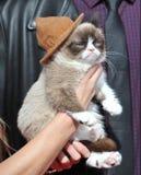 γάτα γκρινιάρα Στοκ φωτογραφίες με δικαίωμα ελεύθερης χρήσης