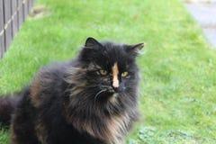 γάτα γκρινιάρα Στοκ Φωτογραφία