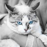 Γάτα εκμετάλλευσης κοριτσιών στοκ φωτογραφίες