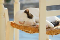 γάτα ελληνικά Στοκ φωτογραφία με δικαίωμα ελεύθερης χρήσης